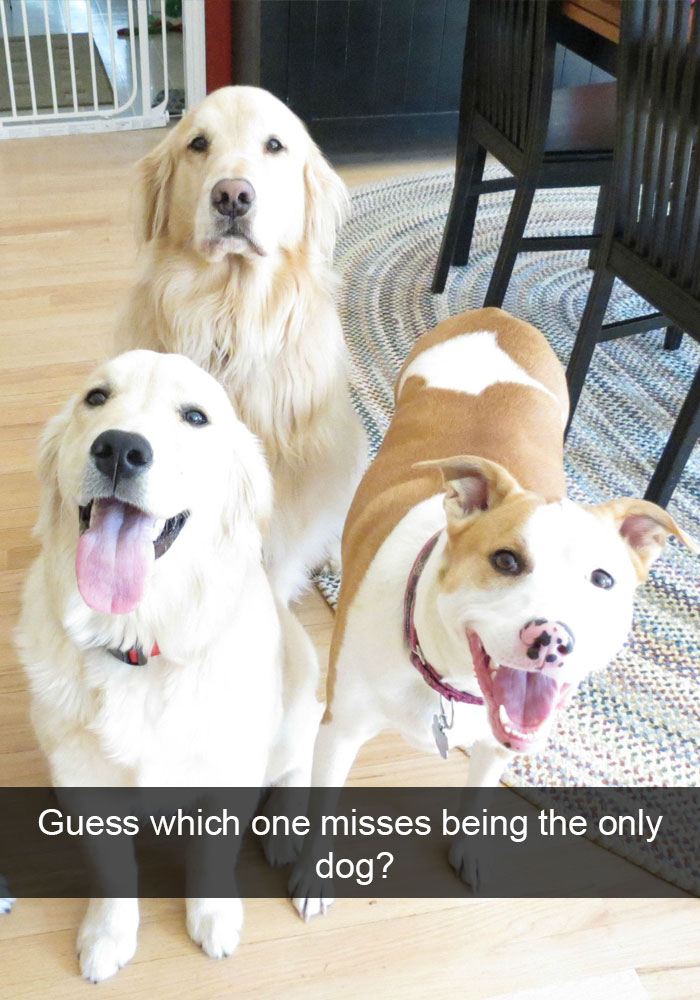 funny-dog-snapchats-95-581b32f6adc28__700