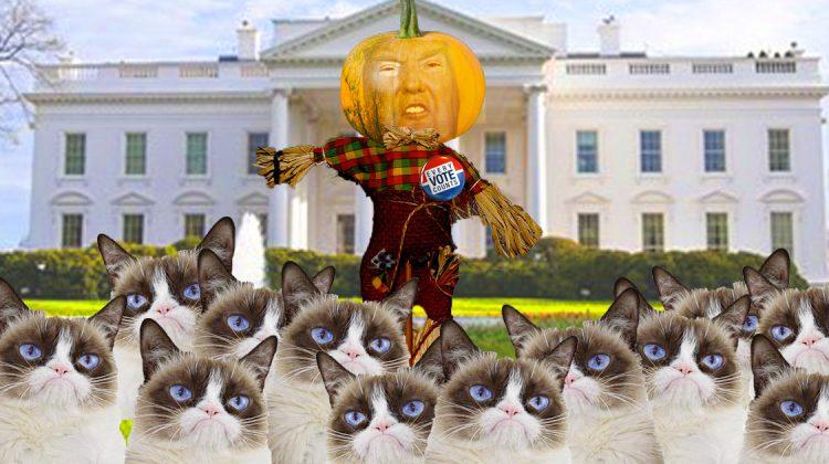 memes trump grumpy cat trumpy cat