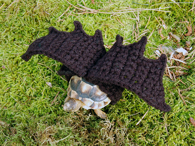 Mode für Schildkröten